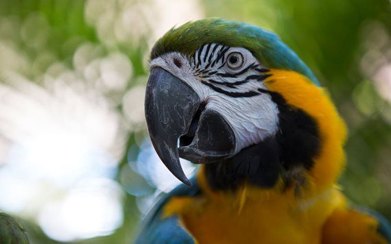 close up of blue macaw