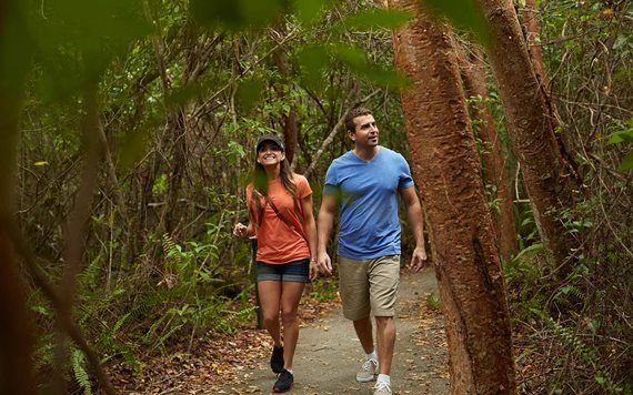 Hiking in Everglades National Park Gumbo Limbo Trail