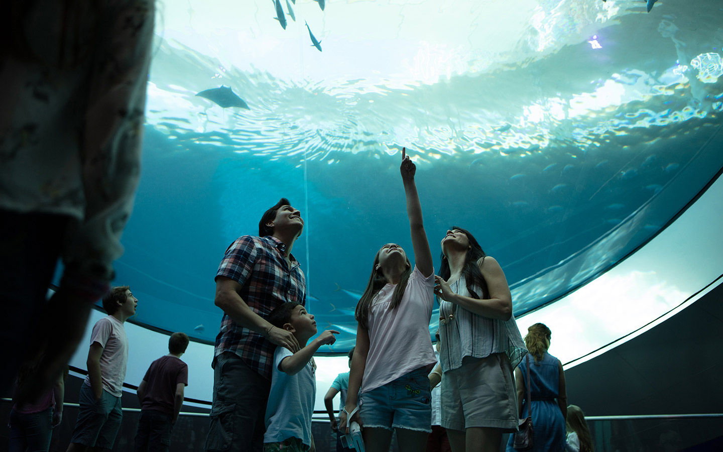Things To Do With Kids In Miami Before Or After A Cruise