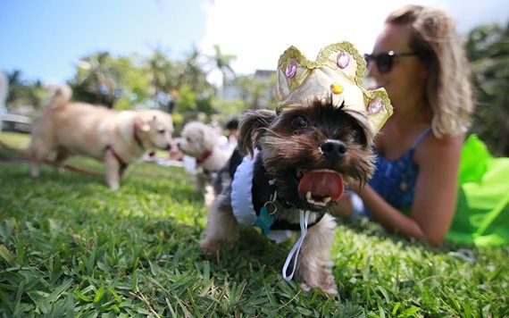 Woofstock at the Barnacle