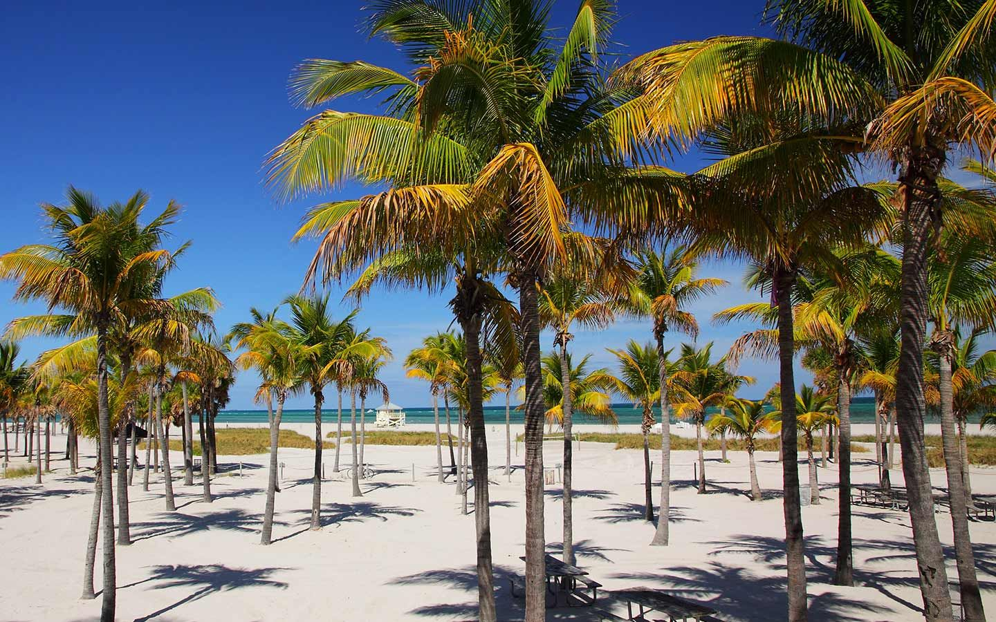 Things To Do In Key Biscayne